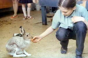 Первый питомец - заяц